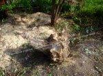 Расчистка участка. Покос травы,бурьяна. Спил дерева.